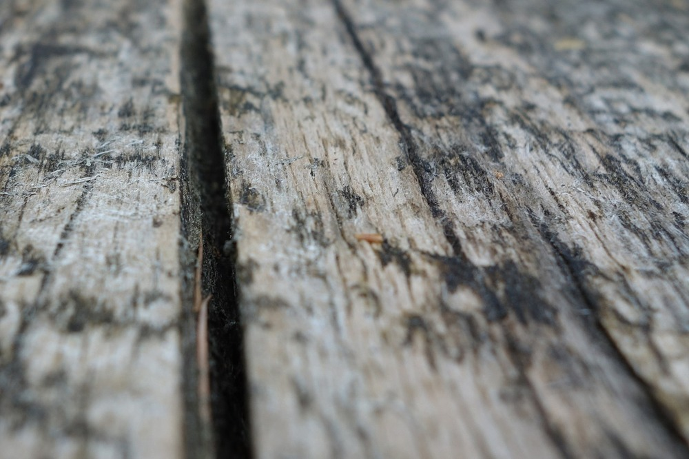 Mold On Deck Boards