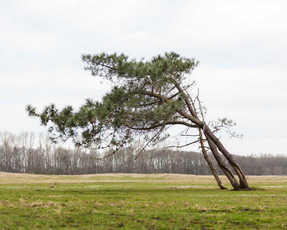 Zwin Nature Parc, Belgium
