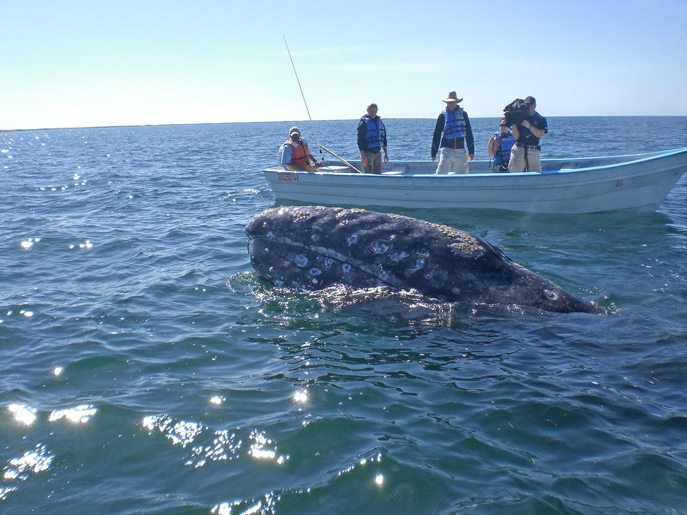 4_whale-(2).jpg