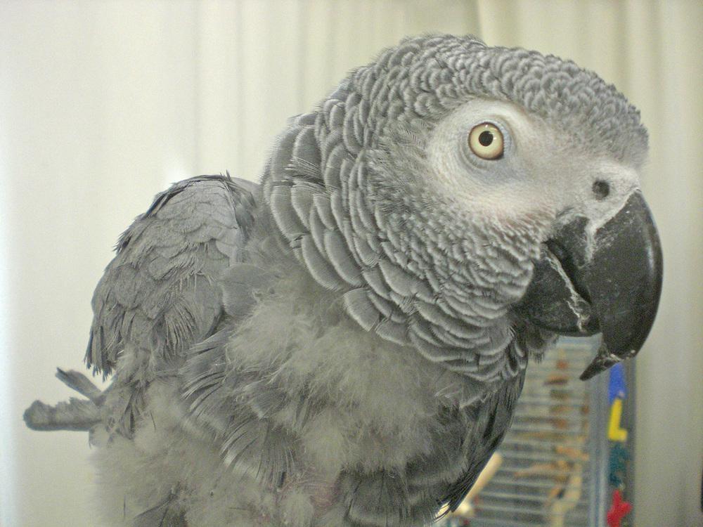 8_parrots-(1).jpg
