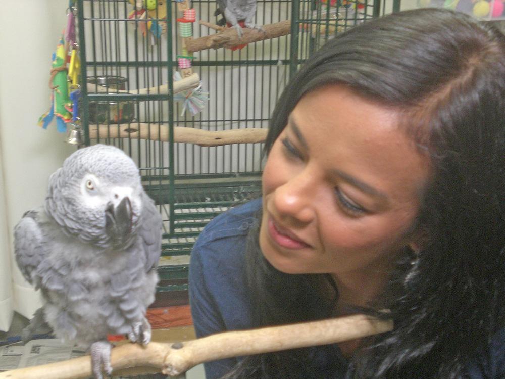 8_parrots-(2).jpg