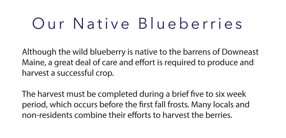 image_blueberryfield text.jpg