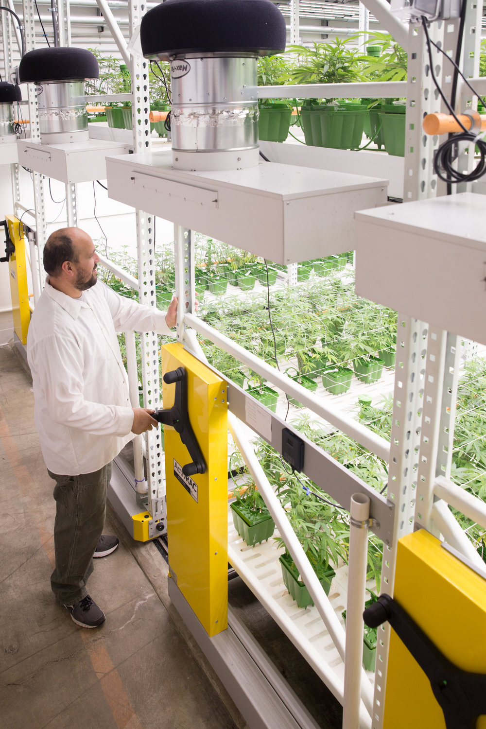 High-Yield Cannabis Grow Facility