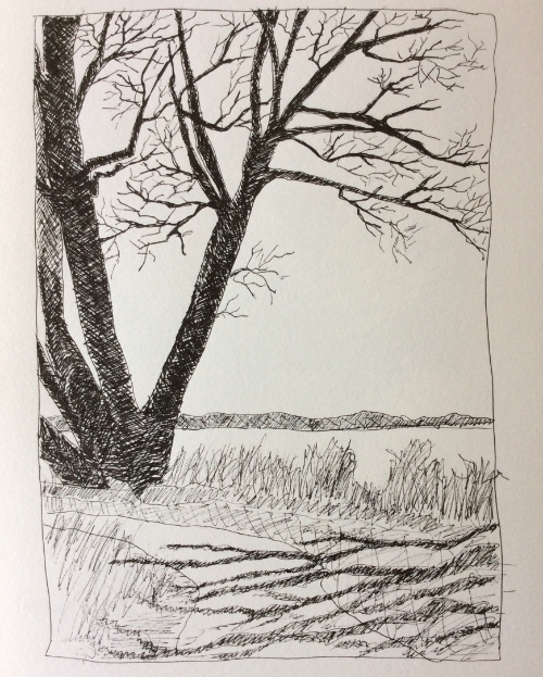 On the path behind my parents' house on the Bay of Quinte. Art journal, ink.