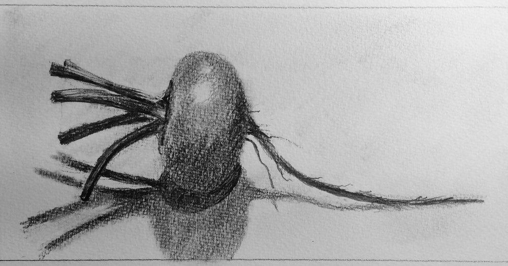 """""""Beet."""" Art journal, pencil."""