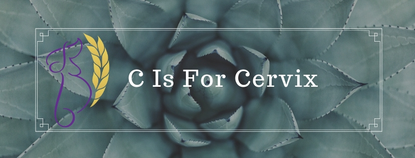 C Is For Cervix.jpg