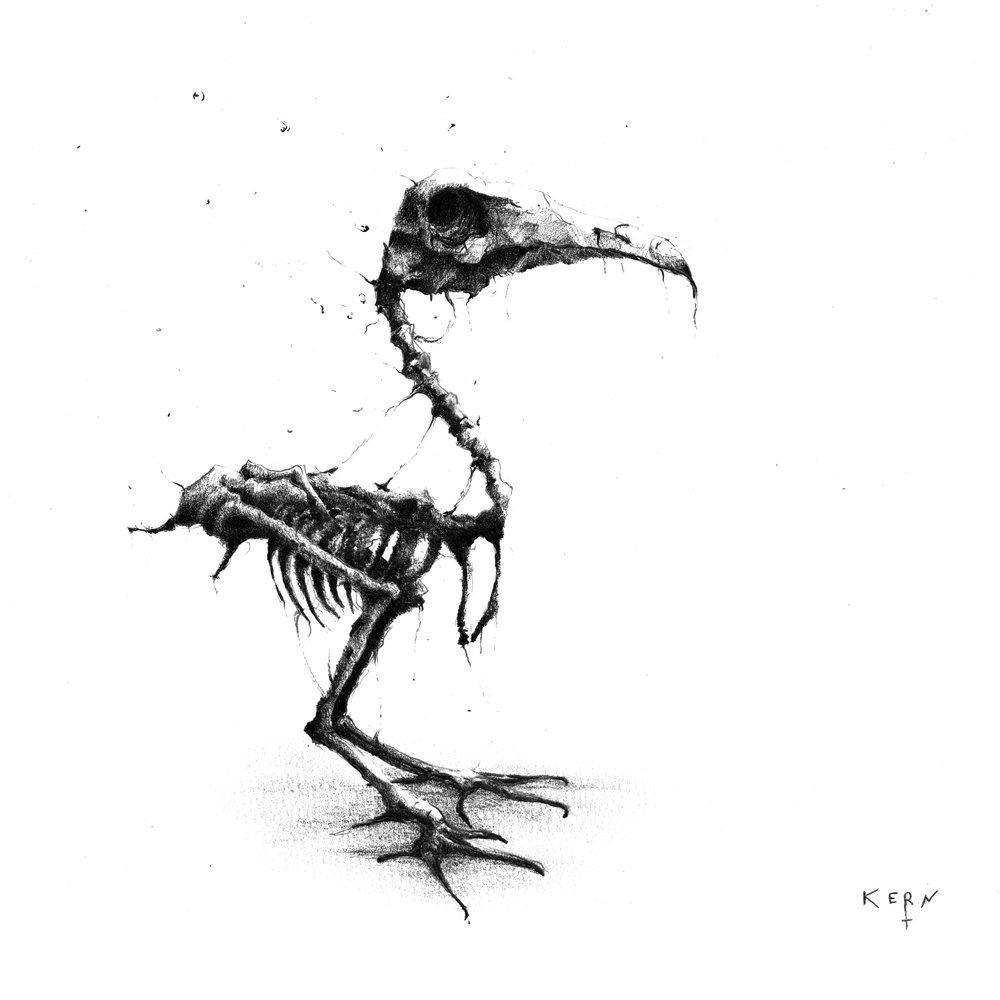 crow-skeleton.jpg