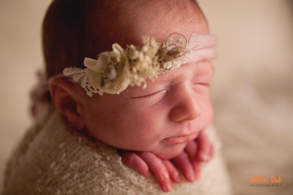 Willow Oak Photography Jackson Tennessee Newborn photographer