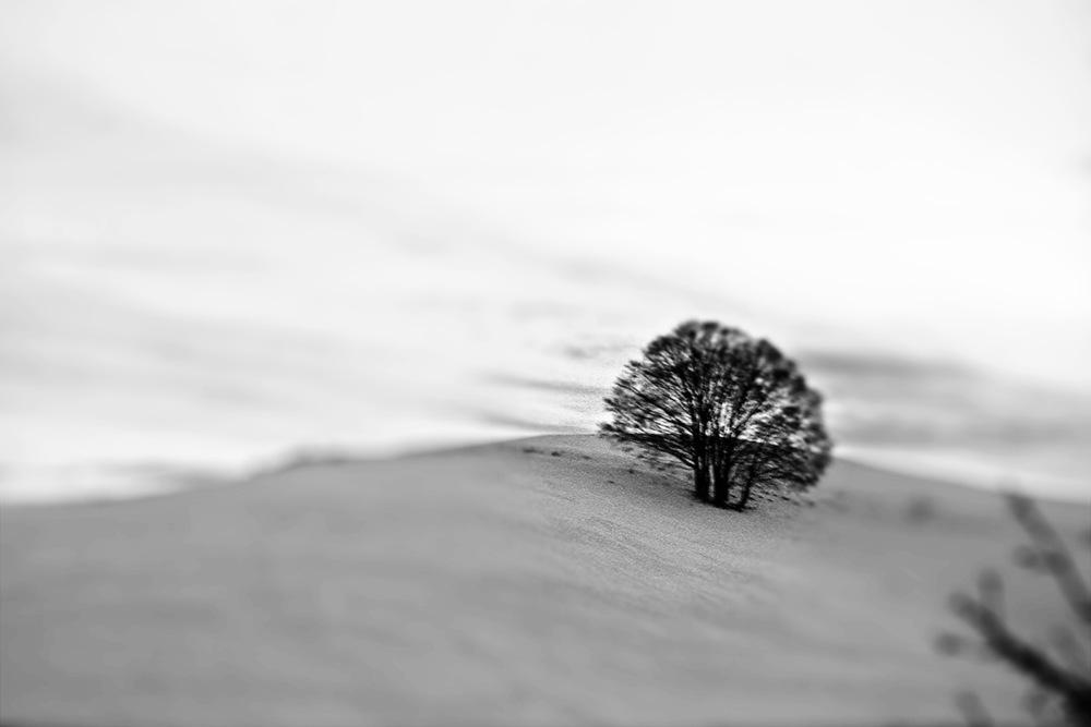 FLASHBACK: TREE
