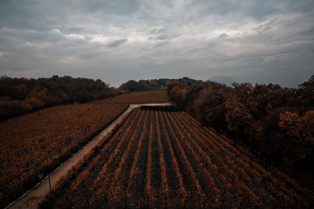 AUTUMN IN THE VINEYARD - Franciacorta