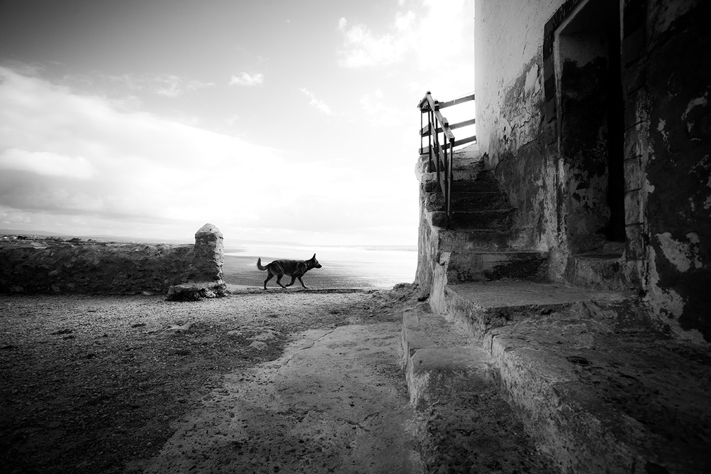 WALKING DOG - Sidi Kaouki