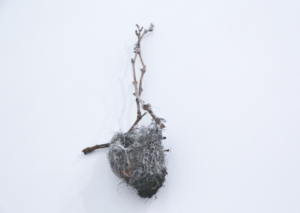 Nest Unknown fibers and plastic 2013-2015 Description: An object created from a deconstructed bird's nest which was recomposed and then reintroduced to the outdoors two seasons later, thereby allowing birds to reinhabit it.
