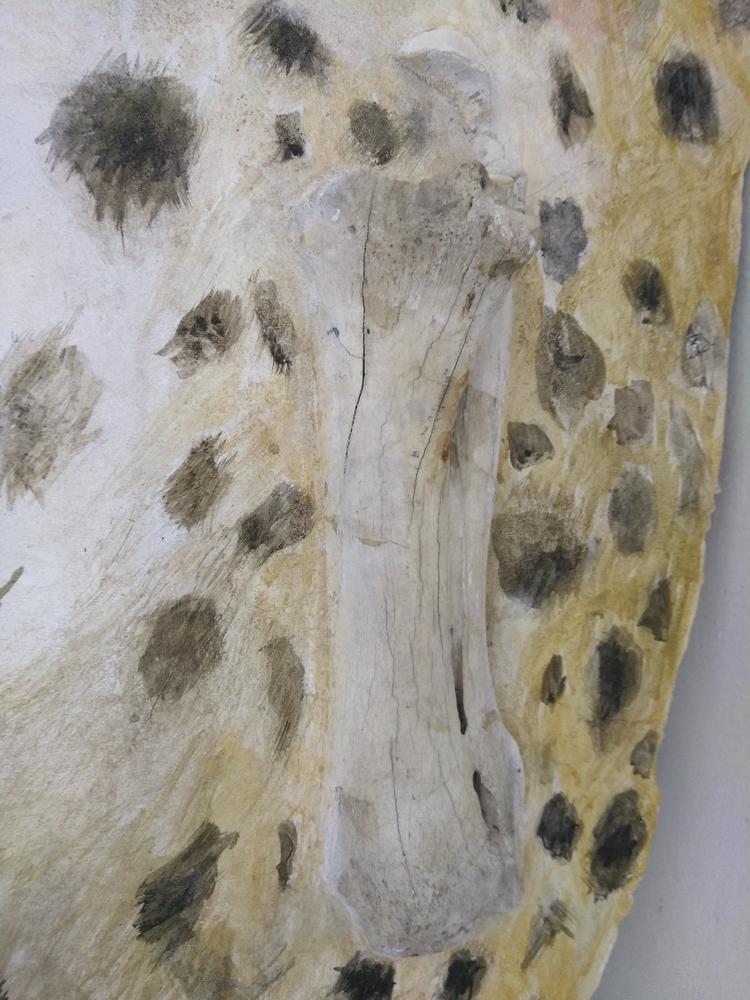 Fresco Bone.jpg