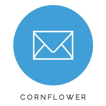 Cornflower.jpg