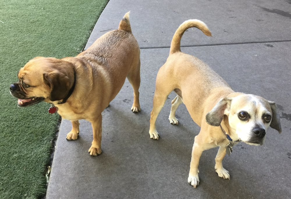 This is Bruno and Max. They're Erin Russell's puggles and the firm mascots. We love all of our clients, but we especially welcome dog owners and dog lovers!