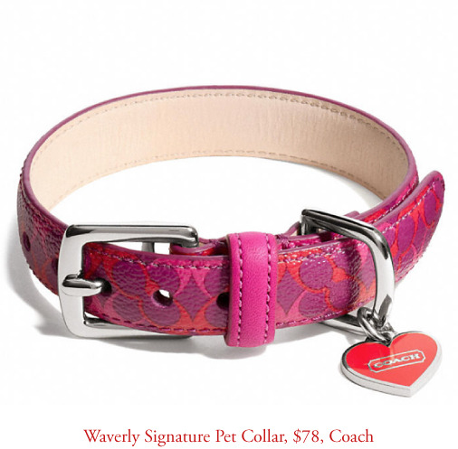waverly-pet-collar-coach.jpg
