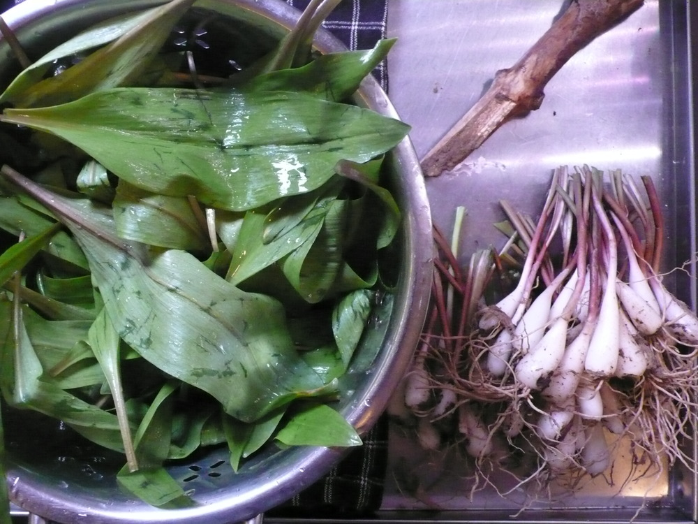 Ramps divided, and the stick I harvested them with.