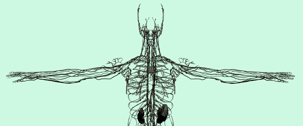 LymphSystemBannerAq-1C.png
