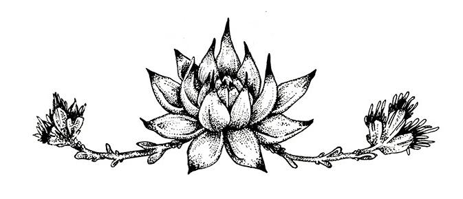 ash_miyagawa_succulent