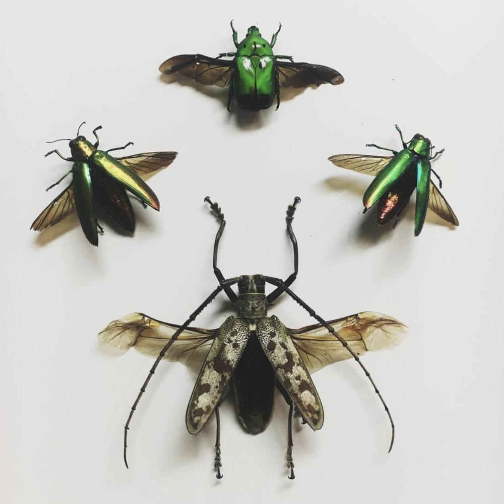 beetles.png