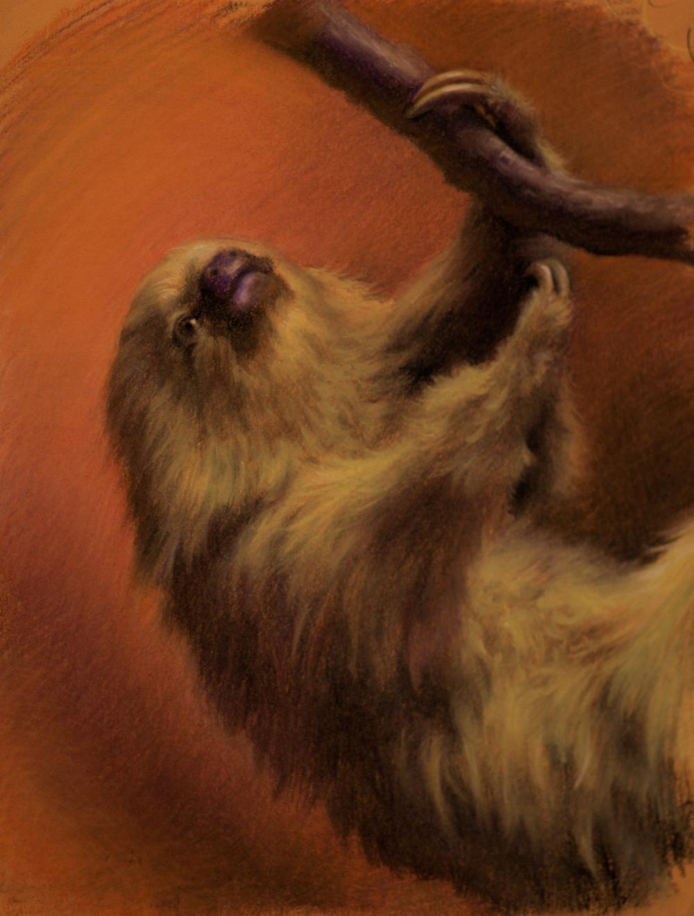 2toed_sloth.jpg