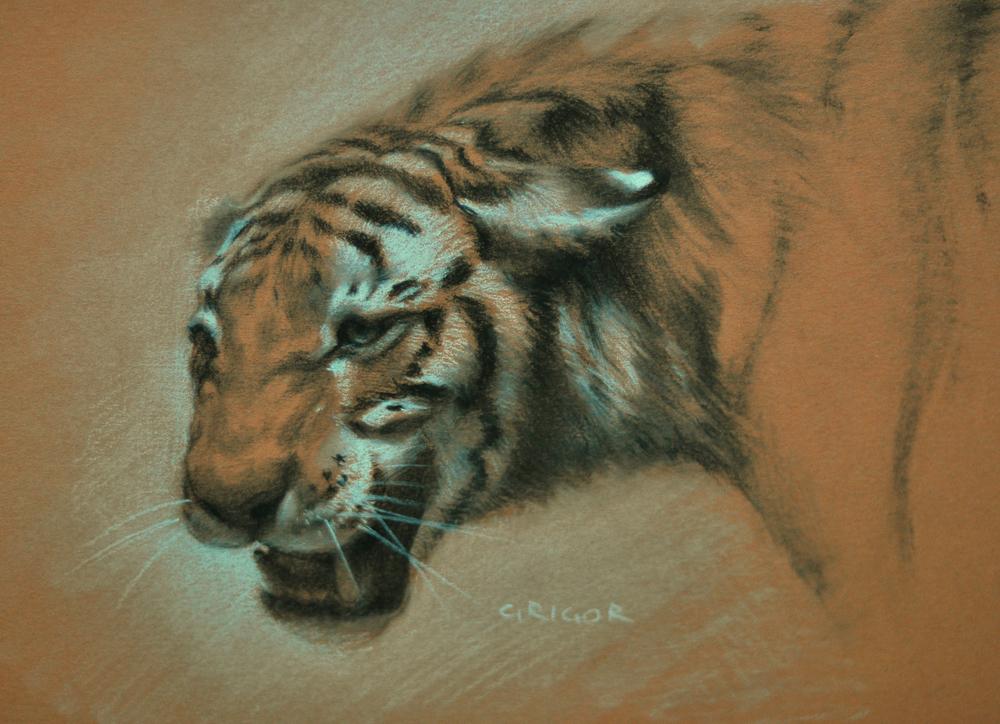 tiger_feildMuseum_1.jpg