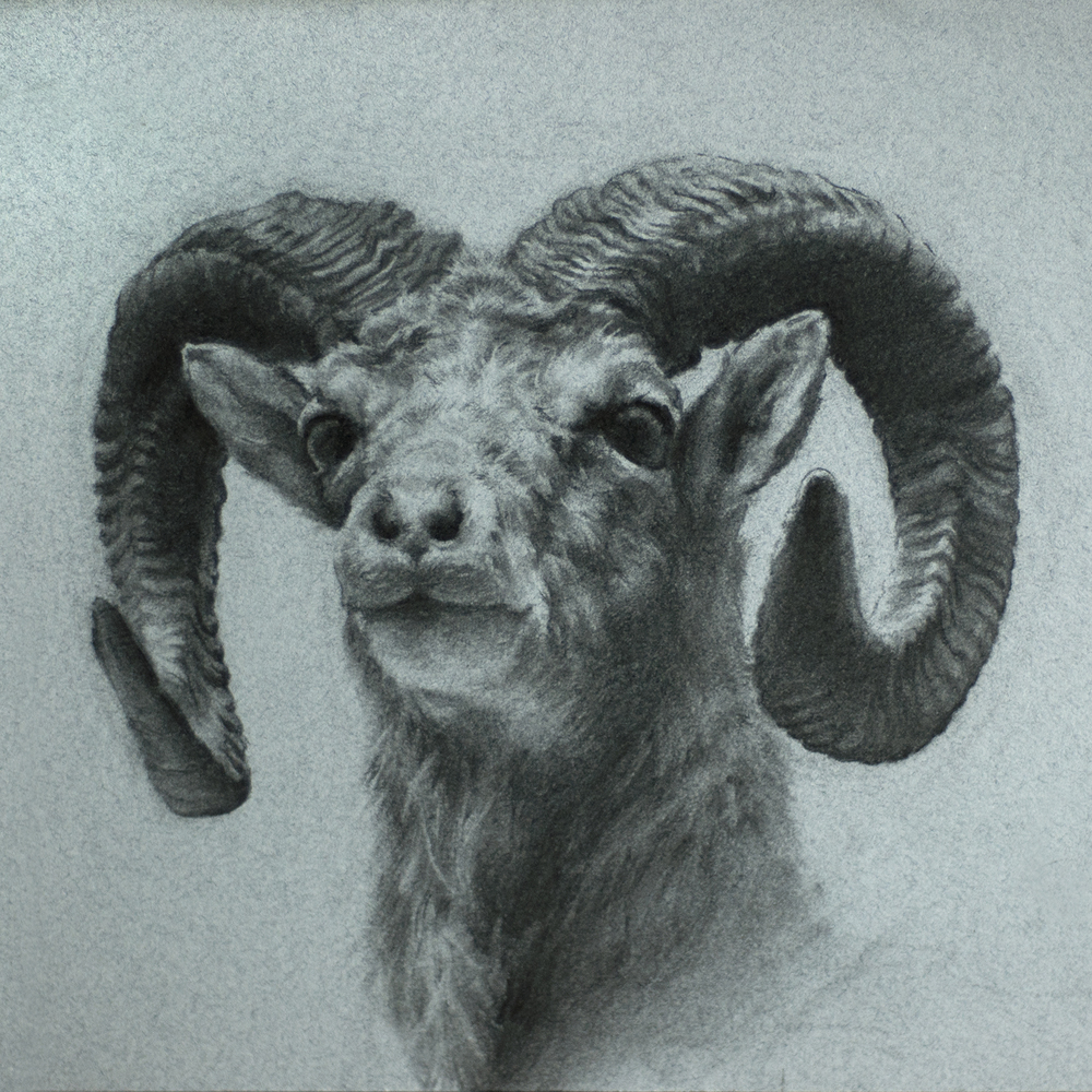 charcoal - done at the Field Museum Chicago 9x9""