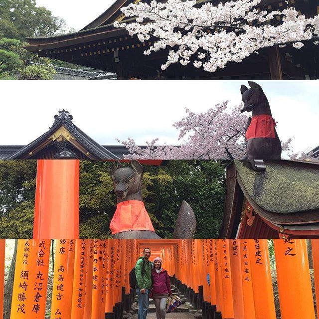 The shrine and the thousand torii gates at Fushimi Inari