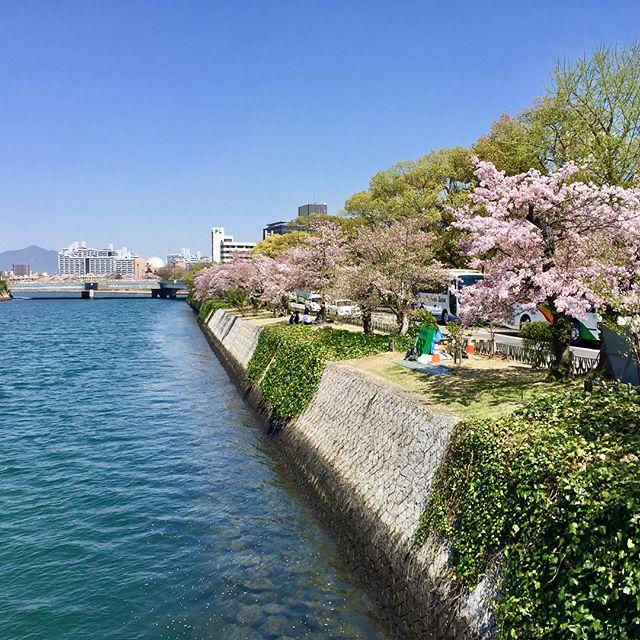 Late post: The Sakura at Hiroshima and Miyajima