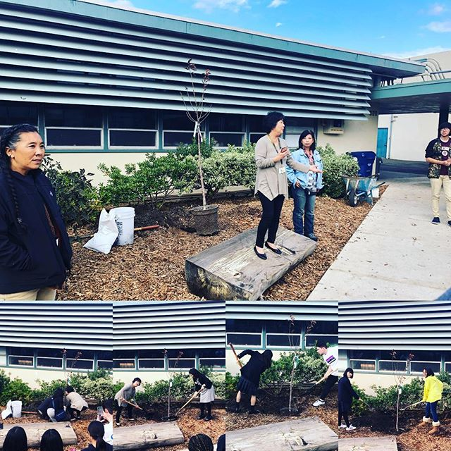 Today the students from Kitakami helped plant three new Sakura trees at Castro Valley High School!