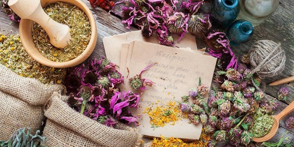 herbalism101caity.jpg