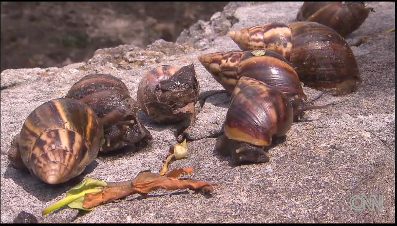 giant snails 2