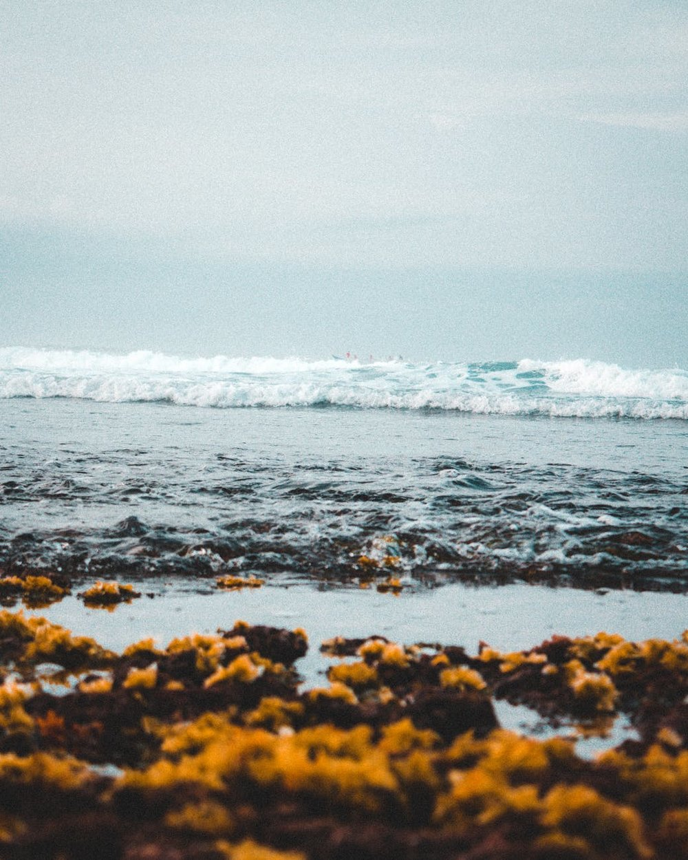 seaweed benefits