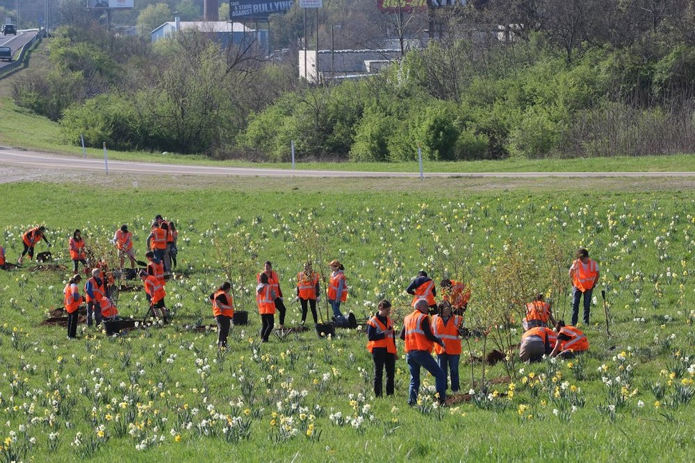 2015-2016   60,000 daffodil bulbs and 100 crepe myrtles added to I-275 exits Heiskell, Baxter, and Woodlawn.