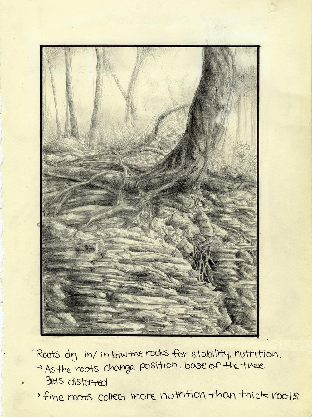 'Plantness' study