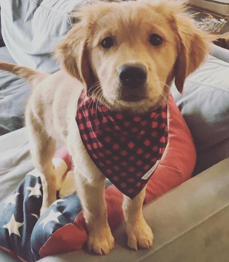 Dog_Bandana_Buffalo_Check_Flannel_SUNDAYS_Golden_Retriever.JPG