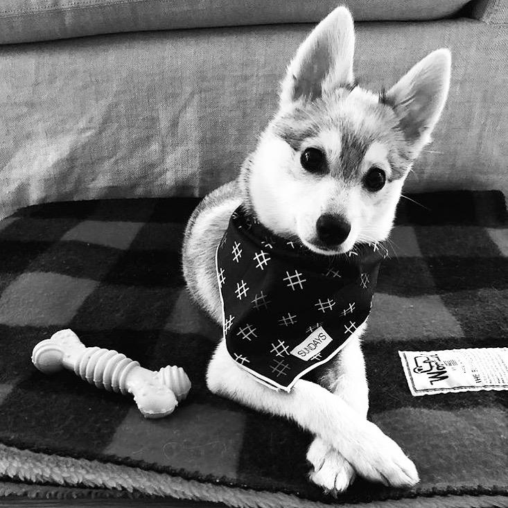 Dog_Bandana_Hashtag_SUNDAYS_Winnie_Kleekai.JPG