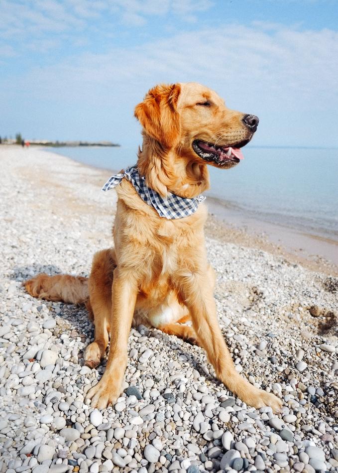 Dog_Bandana_Blue_White_Gingham_SUNDAYS-8475.jpg