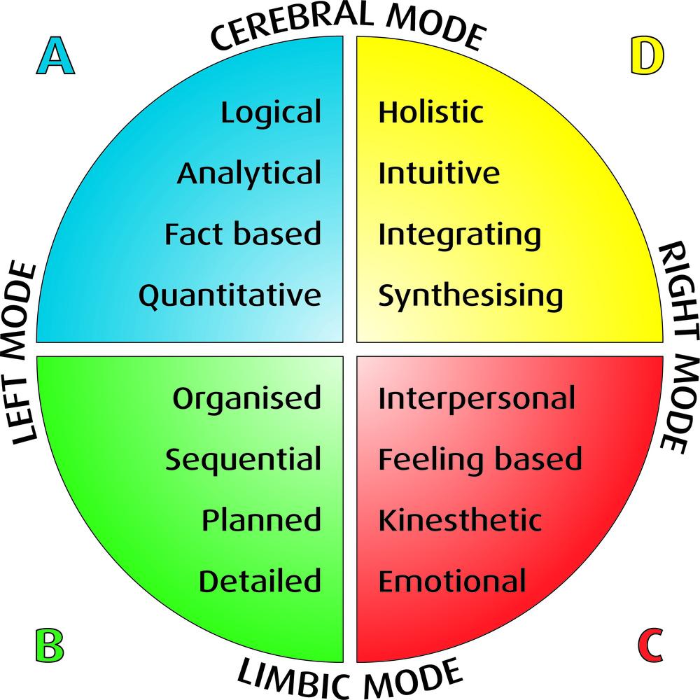 Whole-Brain-Model.jpg