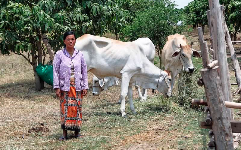 A woman we visited in Kampong Speu, Kandal province, stands with her cows that she saved for and purchased using the Tabitha savings program.