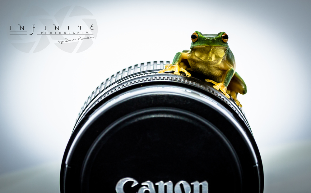 Frog-tographer