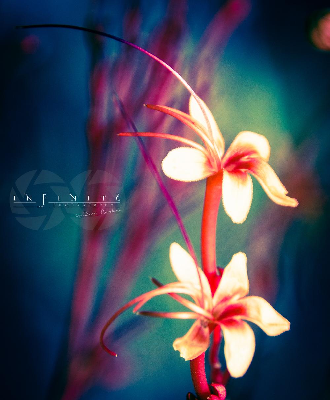 Dainty Petals