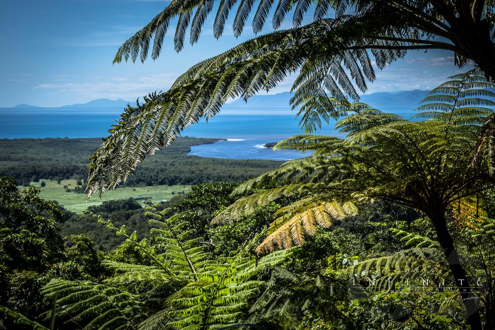 Daintree Rainforest Lookout