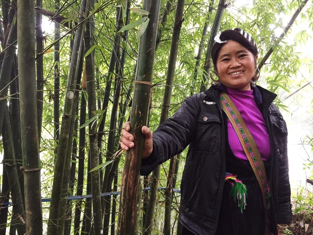 may bamboo.JPG