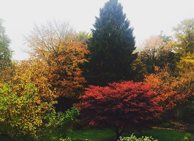 The view from my new office looking lovely and autumnal and brightening up a pretty grey day #autumnleaves #October