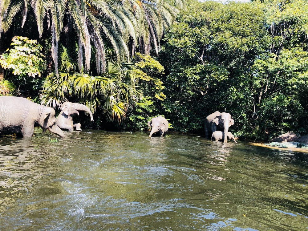Jungle Cruise @ Adventureland