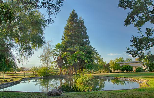 "The ""Backyard Pond"" at Sky Ridge Ranch"