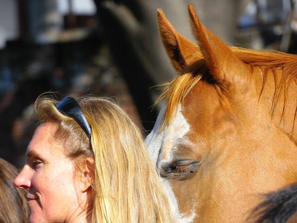 The horses provide a sublime presence