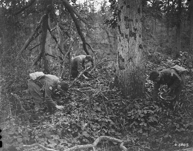 Canadians blackberrying in Bourlon Wood after capturing it. Visible shrapnel damage to trees, October, 1918. Canada. Dept. of National Defence/Library and Archives Canada/PA-003275