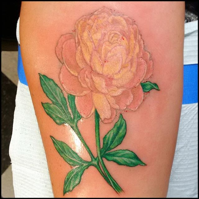 Fun peony flower with no outline. #abouttimetattoo, #nashuatattooshop, #kevinbuckstruptattoos, #japaneseflowertattoo,